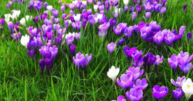 Wiosna zawitała do klas pierwszych